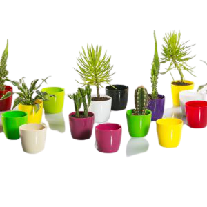 Saksije za kaktuse,sukulente,zacinsko bilje