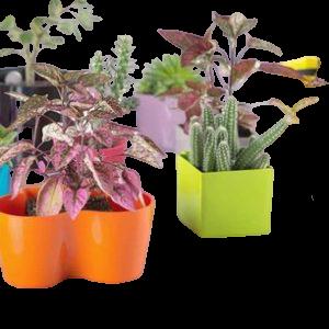 Saksije sa magnetom za kaktuse,sukulente, zacinsko bilje
